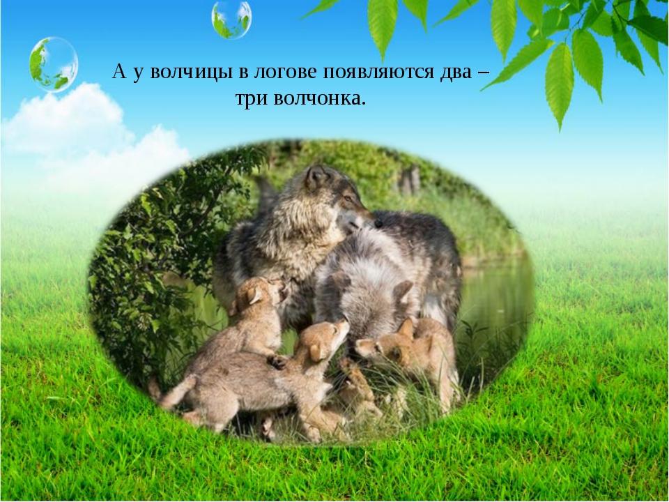 А у волчицы в логове появляются два – три волчонка.