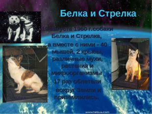 Белка и Стрелка 19 августа 1960 г.собаки Белка и Стрелка, а вместе с ними - 4