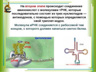 На втором этапе происходит соединение аминокислот с молекулами тРНК, которые