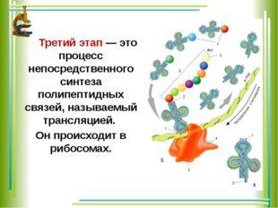 Третий этап — это процесс непосредственного синтеза полипептидных связей, на