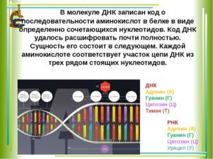 В молекуле ДНК записан код о последовательности аминокислот в белке в виде о