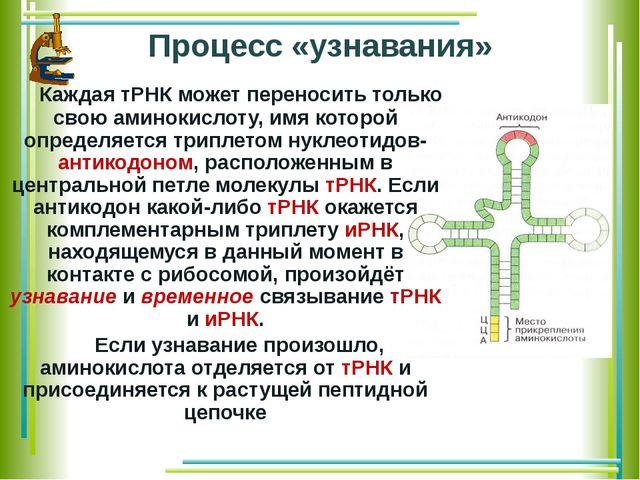 Процесс «узнавания» Каждая тРНК может переносить только свою аминокислоту, и...