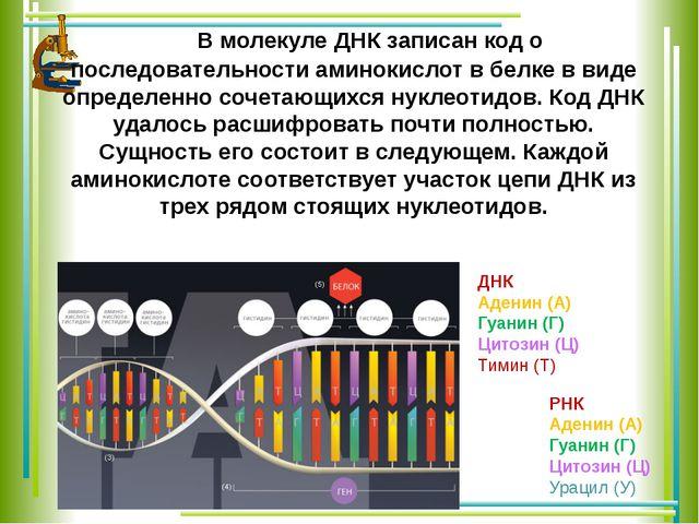 В молекуле ДНК записан код о последовательности аминокислот в белке в виде о...