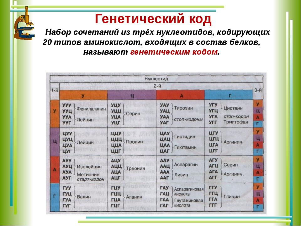 Генетический код Набор сочетаний из трёх нуклеотидов, кодирующих 20 типов ам...