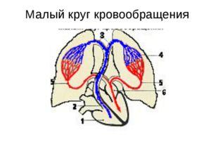 В артериях малого круга течет венозная кровь В венах малого круга течет арте