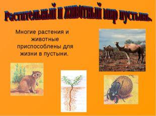 Многие растения и животные приспособлены для жизни в пустыни.