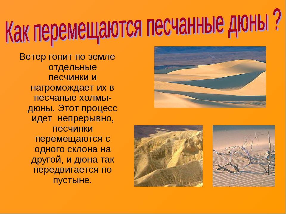 Ветер гонит по земле отдельные песчинки и нагромождает их в песчаные холмы-дю...