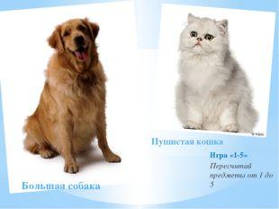 Игра «1-5» Пересчитай предметы от 1 до 5 Большая собака Пушистая кошка