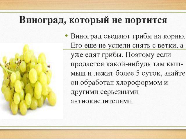 Виноград, который не портится Виноград съедают грибы на корню. Его еще не усп...