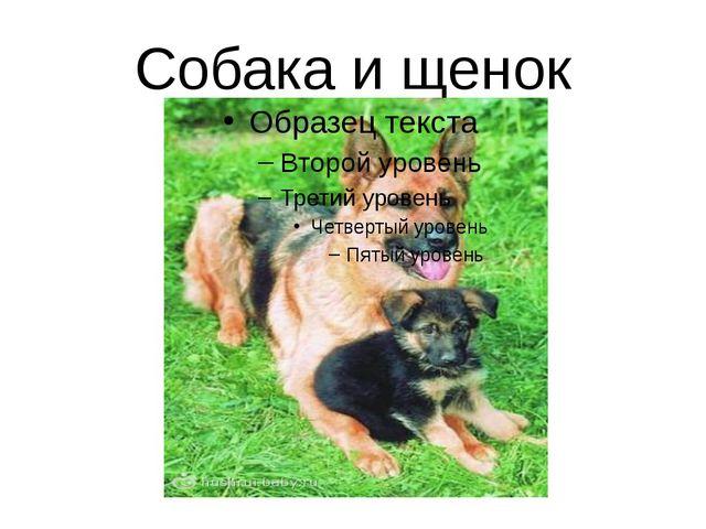 Собака и щенок