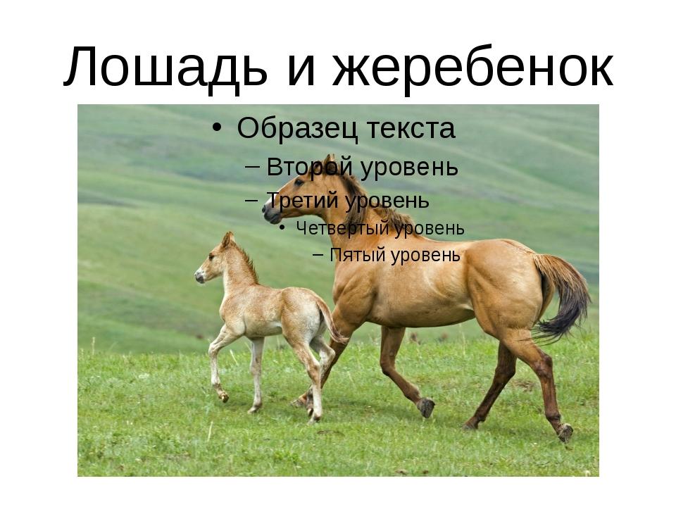 Лошадь и жеребенок