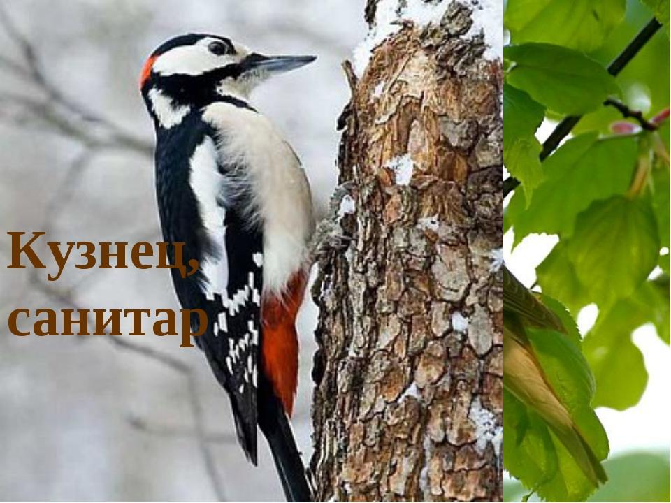 Строитель Первооткрыватель и санитар Певец и артист Кузнец, санитар