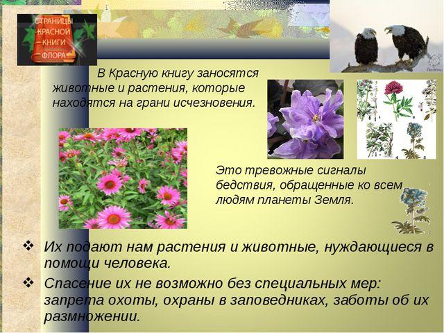 Их подают нам растения и животные, нуждающиеся в помощи человека. Спасение их...