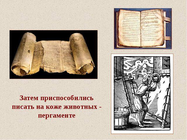 Затем приспособились писать на коже животных - пергаменте