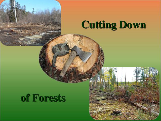 Cutting Down of Forests