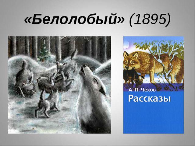 «Белолобый» (1895)