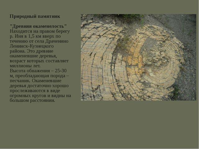 """Природный памятник """"Древняя окаменелость"""" Находится на правом берегу р. Иня в..."""
