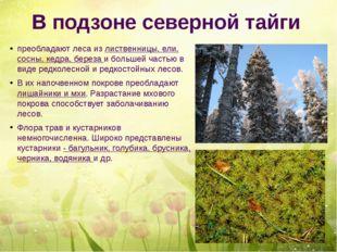 В подзоне северной тайги преобладают леса из лиственницы, ели, сосны, кедра,