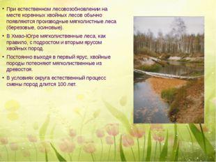 При естественном лесовозобновлении на месте коренных хвойных лесов обычно по
