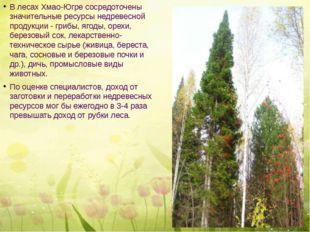 В лесах Хмао-Югре сосредоточены значительные ресурсы недревесной продукции -