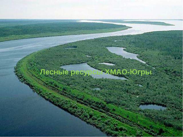 Лесные ресурсы ХМАО-Югры