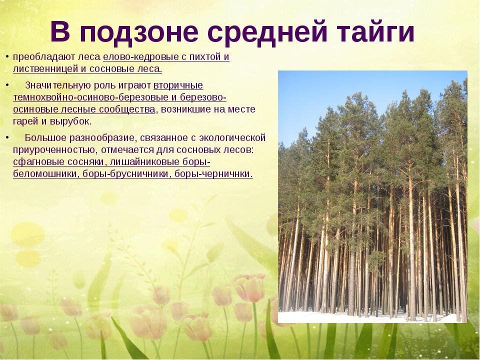 В подзоне средней тайги преобладают леса елово-кедровые с пихтой и лиственниц...