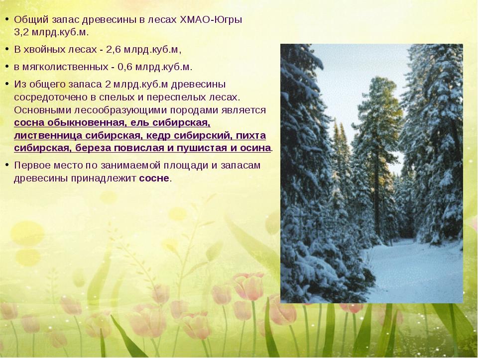 Общий запас древесины в лесах ХМАО-Югры 3,2 млрд.куб.м. В хвойных лесах - 2,...