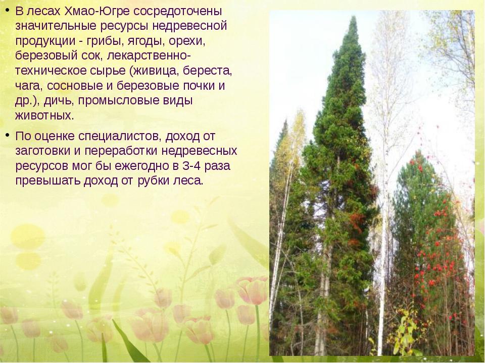 В лесах Хмао-Югре сосредоточены значительные ресурсы недревесной продукции -...