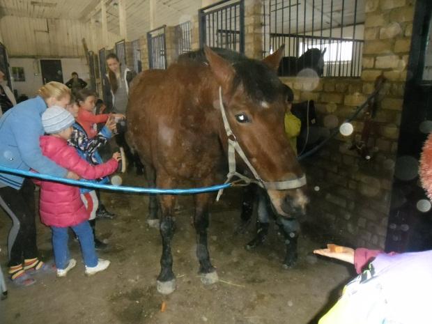 E:\кони\фото конюшня\SAM_4588.JPG