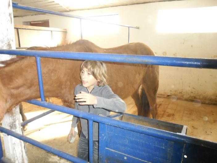 E:\кони\фото конюшня\SAM_4576.JPG