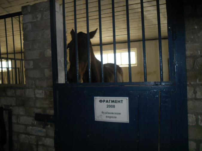 E:\кони\фото конюшня\SAM_4572.JPG