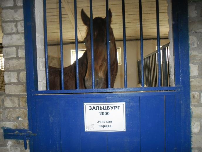 E:\кони\фото конюшня\SAM_4573.JPG