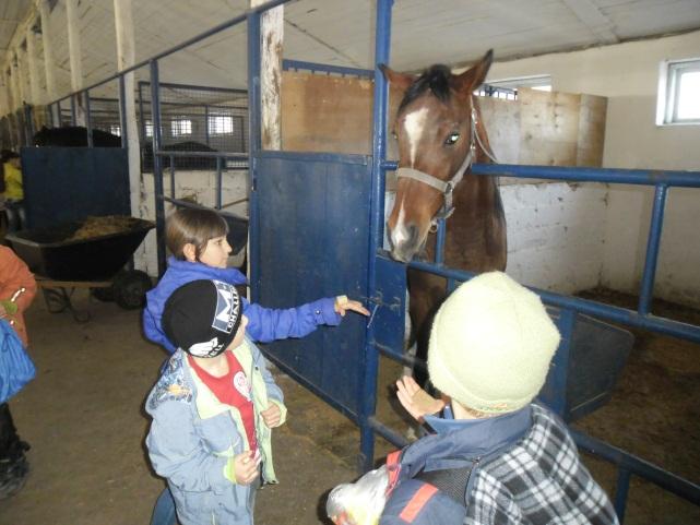 E:\кони\фото конюшня\SAM_4578.JPG