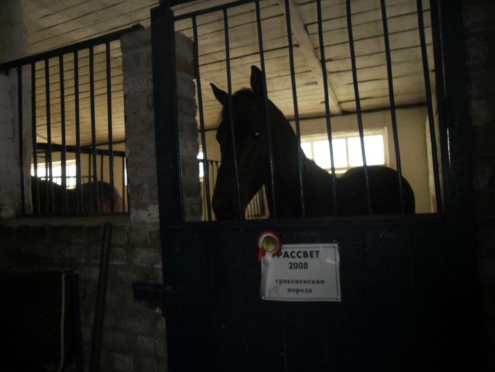 E:\кони\фото конюшня\SAM_4571.JPG