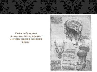 Схема изображений желудочков мозга, черепно-мозговых нервов и основания черепа.