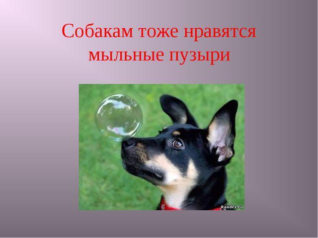 Собакам тоже нравятся мыльные пузыри