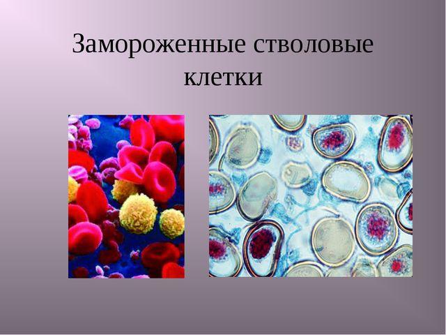 Замороженные стволовые клетки