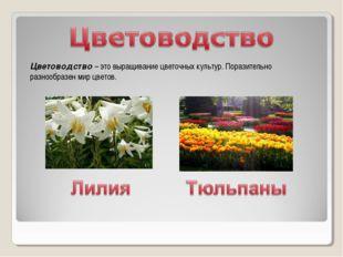 Цветоводство – это выращивание цветочных культур. Поразительно разнообразен м