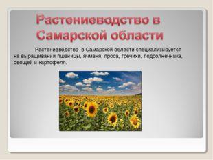 Растениеводство в Самарской области специализируется на выращивании пшеницы,