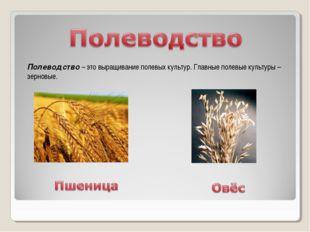 Полеводство – это выращивание полевых культур. Главные полевые культуры – зер