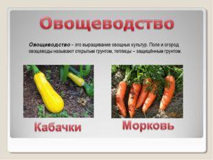 Овощеводство – это выращивание овощных культур. Поле и огород овощеводы назыв