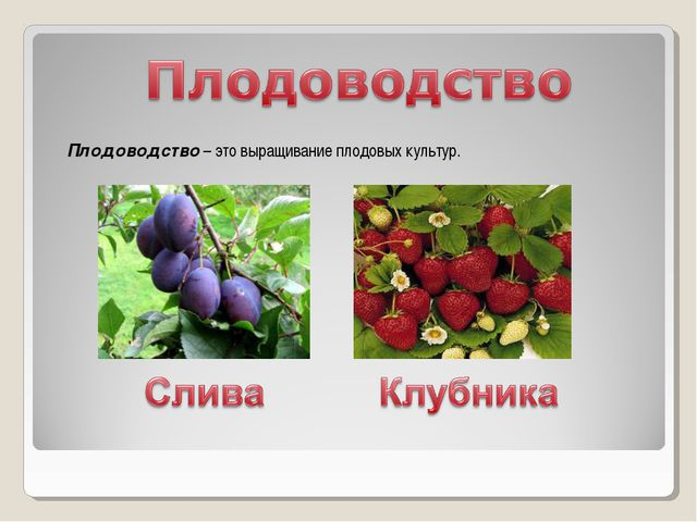 Плодоводство – это выращивание плодовых культур.