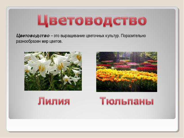 Цветоводство – это выращивание цветочных культур. Поразительно разнообразен м...