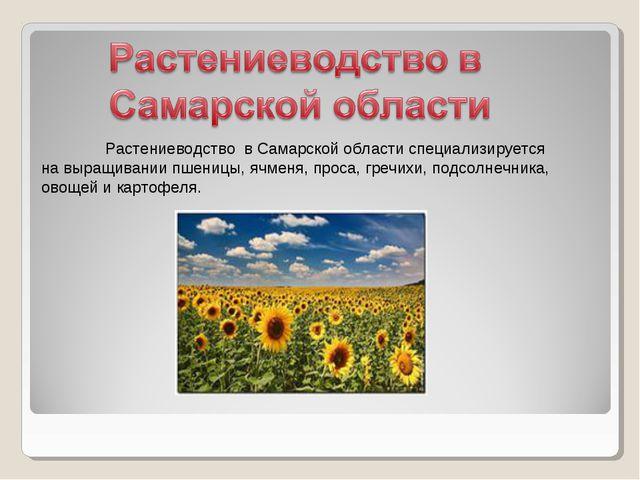 Растениеводство в Самарской области специализируется на выращивании пшеницы,...