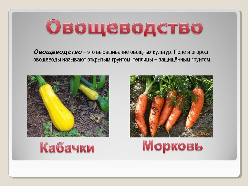 Овощеводство – это выращивание овощных культур. Поле и огород овощеводы назыв...