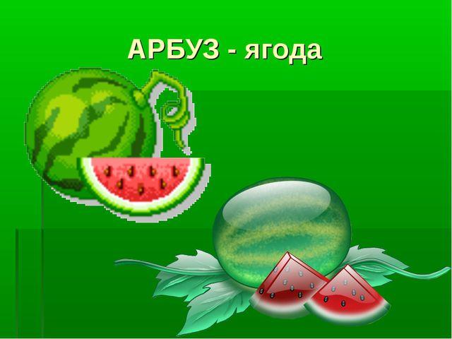 АРБУЗ - ягода