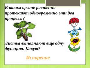 В каком органе растения протекают одновременно эти два процесса? Листья выпол
