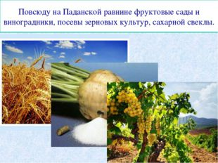 Повсюду на Паданской равнине фруктовые сады и виноградники, посевы зерновых к
