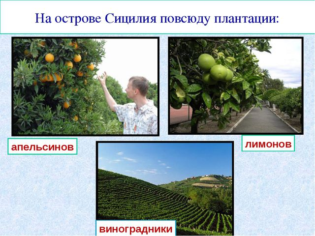 На острове Сицилия повсюду плантации: апельсинов лимонов виноградники