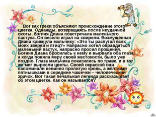 Вот как греки объясняют происхождение этого цветка. Однажды, возвращаясь пос